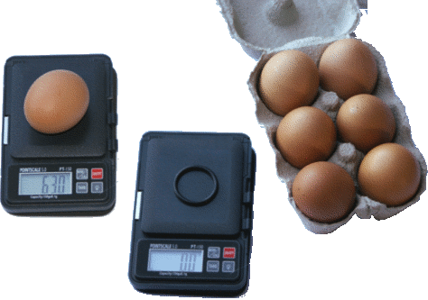 egg weighing scales
